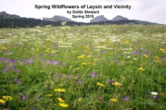 Wildflowers of Leysin and Vicinity Vol. 1 (Spring 2015)rfs_Page_001