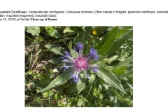Wildflowers of Leysin and Vicinity Vol. 1 (Spring 2015)rfs_Page_029