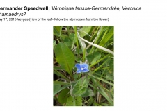Wildflowers of Leysin and Vicinity Vol. 1 (Spring 2015)rfs_Page_093