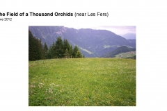 Wildflowers of Leysin and Vicinity Vol. 1 (Spring 2015)rfs_Page_098