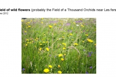 Wildflowers of Leysin and Vicinity Vol. 1 (Spring 2015)rfs_Page_099