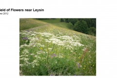 Wildflowers of Leysin and Vicinity Vol. 1 (Spring 2015)rfs_Page_100