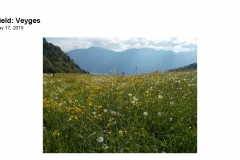 Wildflowers of Leysin and Vicinity Vol. 1 (Spring 2015)rfs_Page_105